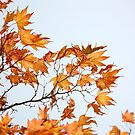 advanced Autumn by yvesrossetti