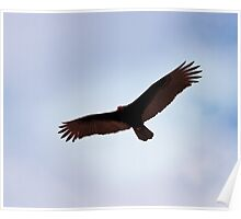 Turkey Vulture over Havana Poster