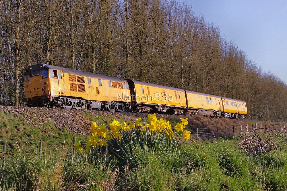 Network Rail Daffodils by Nathan83a