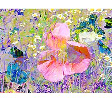 Secret Garden IV Photographic Print