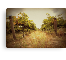 Two Vines Canvas Print