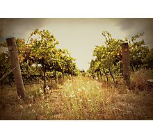 Two Vines Photographic Print