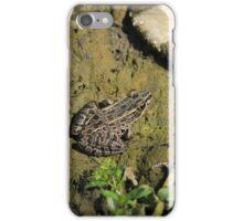 Brown Frog in Mud iPhone Case/Skin