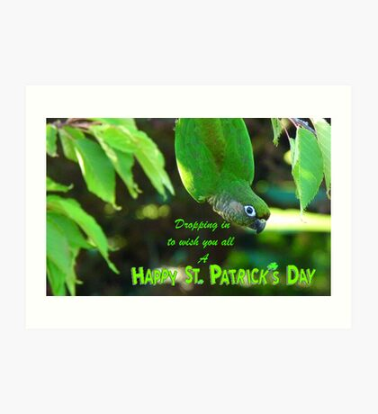 Dropping In To Wish You All A Happy St. Patrick's Day - Conure NZ Art Print