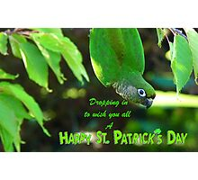 Dropping In To Wish You All A Happy St. Patrick's Day - Conure NZ Photographic Print