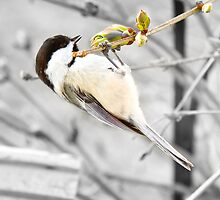 Hanging Around by Trudy Wilkerson