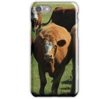 Herd of Cows on the Prairies iPhone Case/Skin