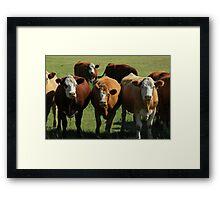Herd of Cows on the Prairies Framed Print