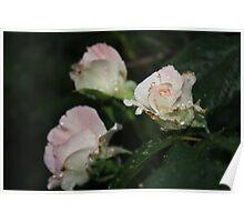 Flower Macro Poster