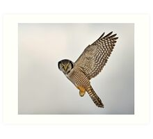 Look...I can Fly! Art Print