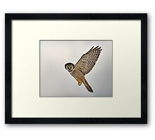 Look...I can Fly! Framed Print