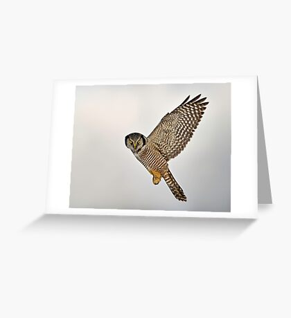Look...I can Fly! Greeting Card