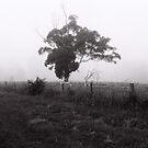 Fog Covered Landscape by spiritoflife