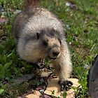 I see a nut! (1) by JamesA1