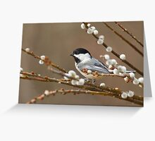 Black-capped Chickadee On Pussy Willow Greeting Card