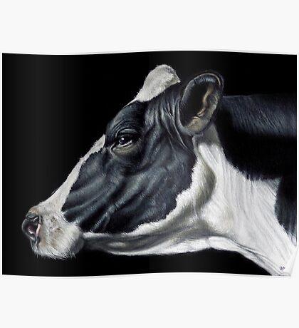 Holstein Friesian Dairy Cow Portrait Poster