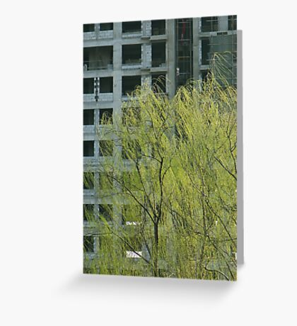 willow and new building Greeting Card