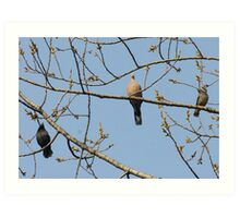 birds are singing happily Art Print