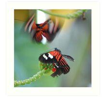 Third-base Butterflies Art Print