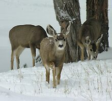 Bambi by LizzieMorrison