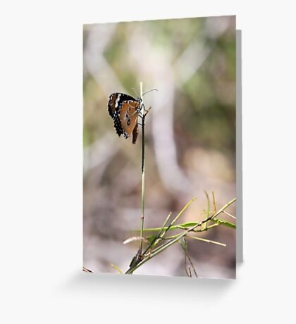 Perched Butterfly, West McDonnell Ranges Greeting Card