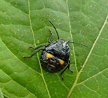 Bug - Masquerade by ArundelArt