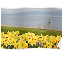 Daffodil time Poster