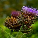 Thistles by Trevor Kersley
