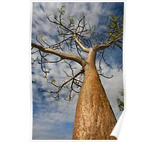 Boab Tree Poster