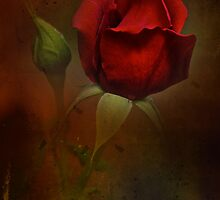 Gothic Rose by Dianne English
