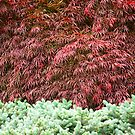Garden Textures by Marilyn Cornwell