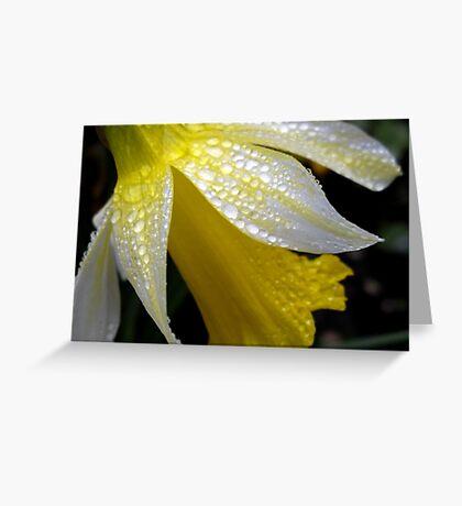 Delicate Daffodil Greeting Card