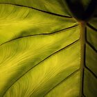 A life of a leaf by Nella Khanis