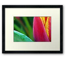 A Paintbrush of Tulip Petals Framed Print