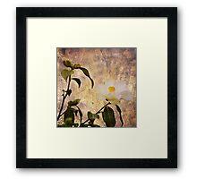 Miss Coppertone Framed Print