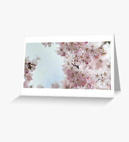 Cherry Greeting Card
