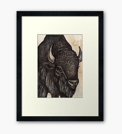 The Black Buffalo Framed Print
