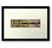 Fourteen Turtles on a Log Framed Print