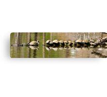 Fourteen Turtles on a Log Canvas Print