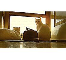 Feline Intrigue Photographic Print