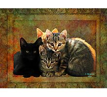 Four Kitty Pile-up Photographic Print