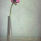 single Anemone  by Iris Lehnhardt
