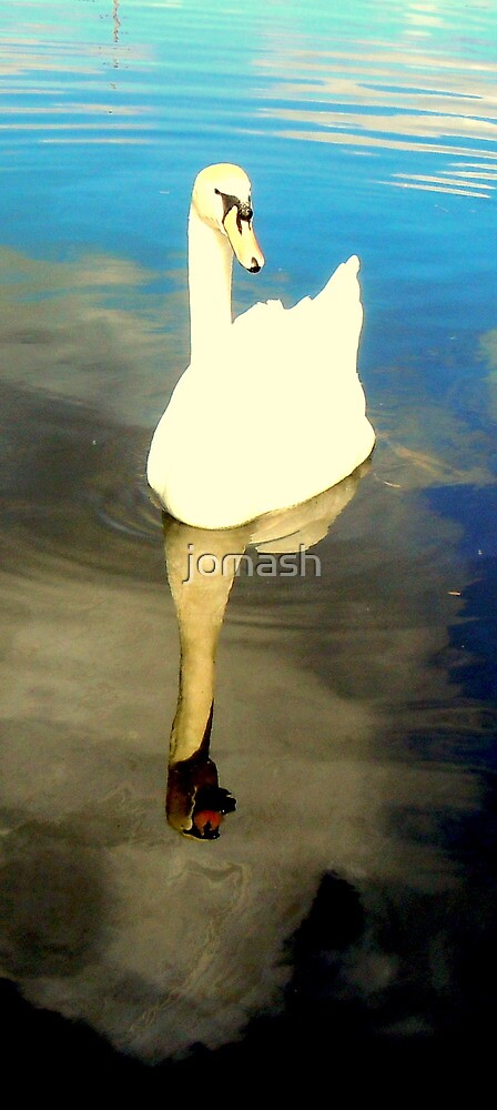 Swan by jomash