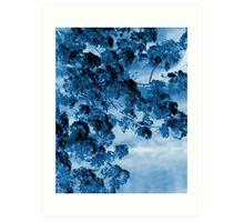 Blue Blossoms Art Print