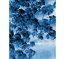Blue Blossoms Photographic Print