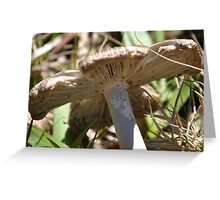 first fungi this season Greeting Card
