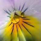 Violet by Lifeware