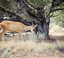 Just Grazing - Prineville, OR by kristideephotog