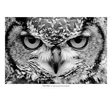 """The Owl"" - Black and White Portrait Photographic Print"