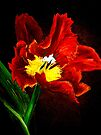 The Red Tulip by © Janis Zroback